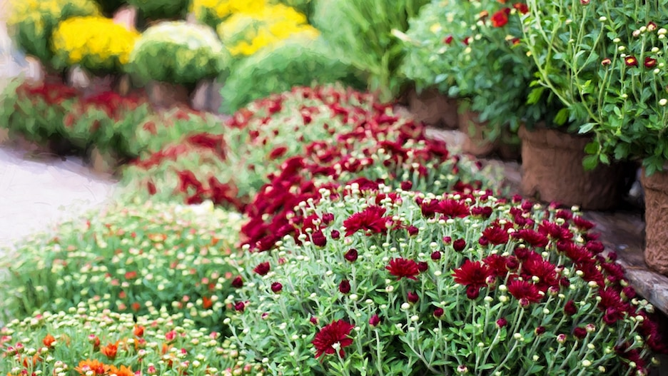 Fall Gardening Ideas My Thoughts Ideas and Ramblings