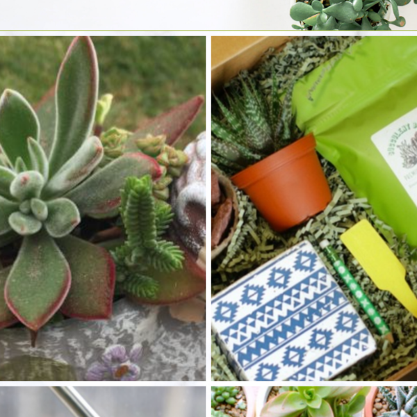 Top Succulent Subscription Boxes